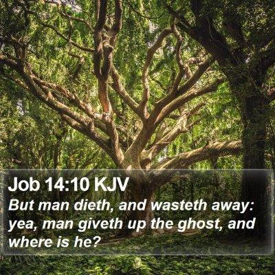 Job 14:10 KJV Bible Verse Image