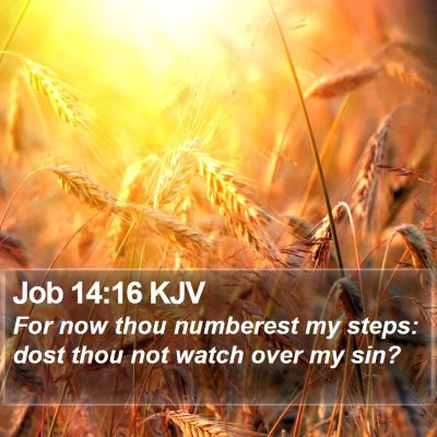 Job 14:16 KJV Bible Verse Image