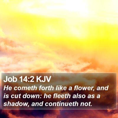Job 14:2 KJV Bible Verse Image