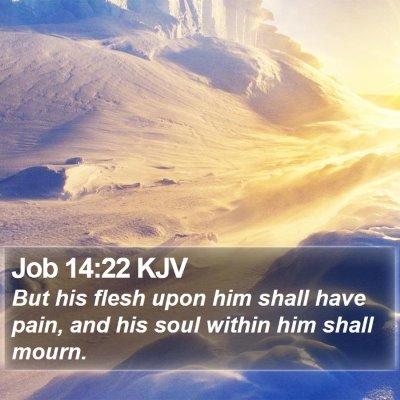 Job 14:22 KJV Bible Verse Image