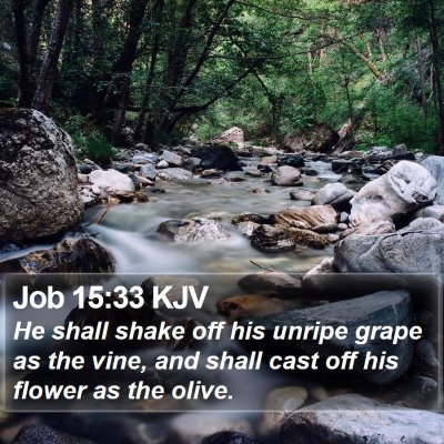 Job 15:33 KJV Bible Verse Image