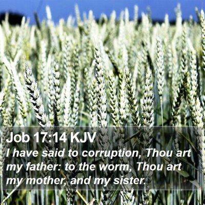 Job 17:14 KJV Bible Verse Image