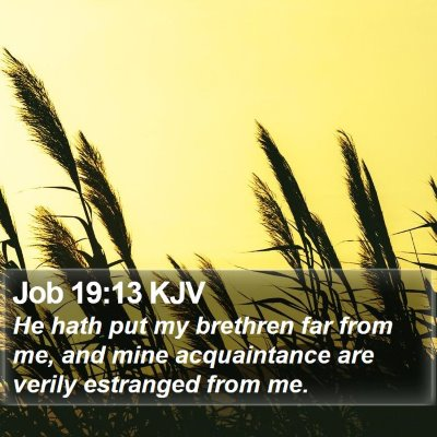 Job 19:13 KJV Bible Verse Image