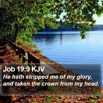 Job 19:9 KJV Bible Verse Image