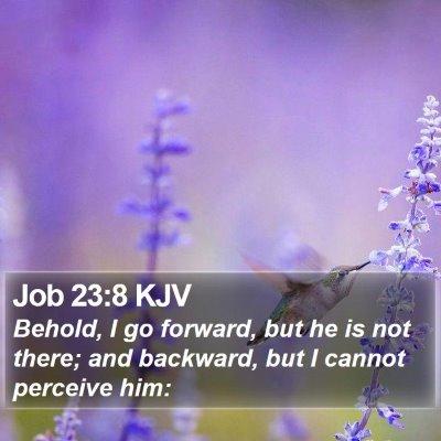 Job 23:8 KJV Bible Verse Image