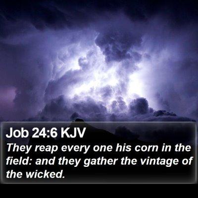 Job 24:6 KJV Bible Verse Image