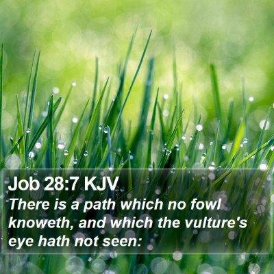 Job 28:7 KJV Bible Verse Image
