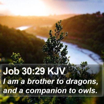 Job 30:29 KJV Bible Verse Image