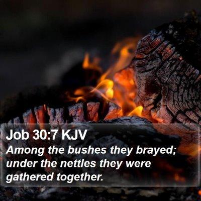 Job 30:7 KJV Bible Verse Image