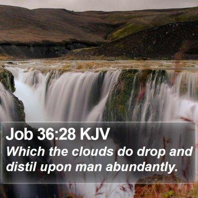 Job 36:28 KJV Bible Verse Image
