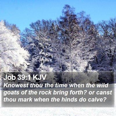 Job 39:1 KJV Bible Verse Image