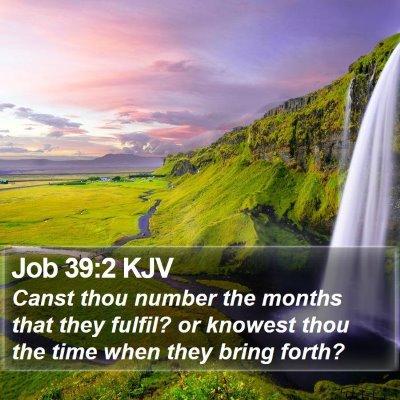Job 39:2 KJV Bible Verse Image
