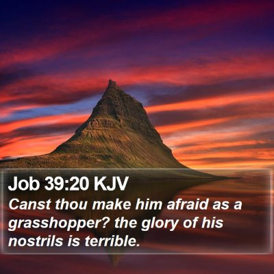 Job 39:20 KJV Bible Verse Image