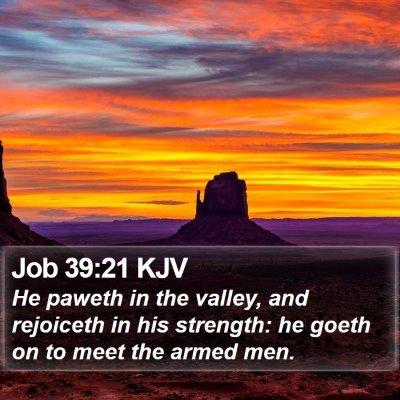 Job 39:21 KJV Bible Verse Image
