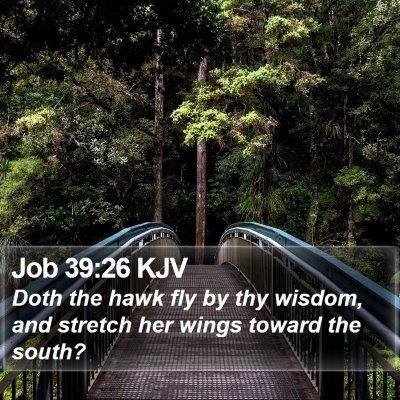 Job 39:26 KJV Bible Verse Image
