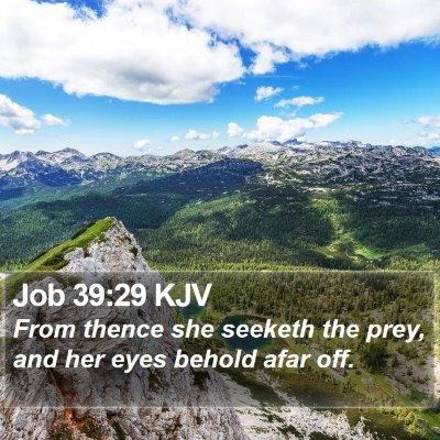 Job 39:29 KJV Bible Verse Image