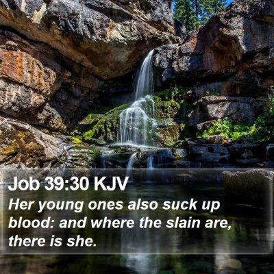 Job 39:30 KJV Bible Verse Image