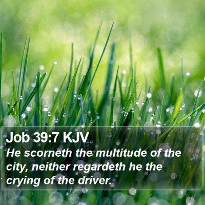 Job 39:7 KJV Bible Verse Image