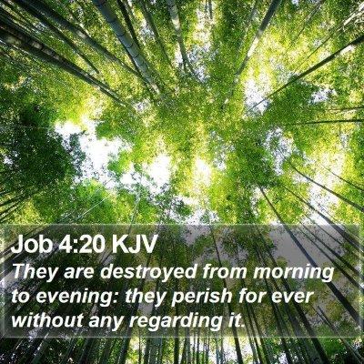 Job 4:20 KJV Bible Verse Image