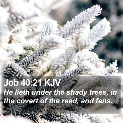 Job 40:21 KJV Bible Verse Image
