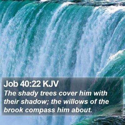 Job 40:22 KJV Bible Verse Image