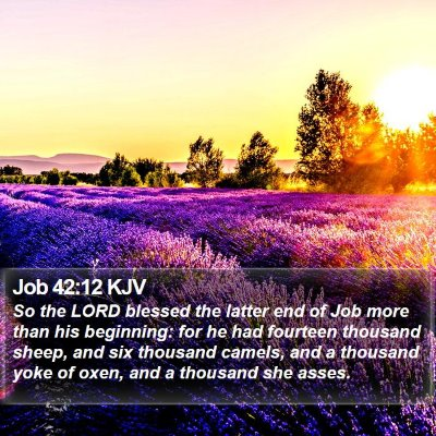 Job 42:12 KJV Bible Verse Image