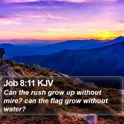 Job 8:11 KJV Bible Verse Image