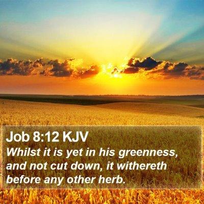 Job 8:12 KJV Bible Verse Image
