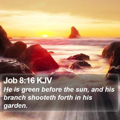 Job 8:16 KJV Bible Verse Image