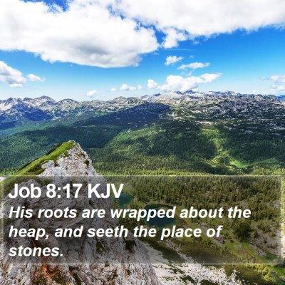 Job 8:17 KJV Bible Verse Image