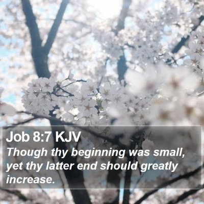Job 8:7 KJV Bible Verse Image