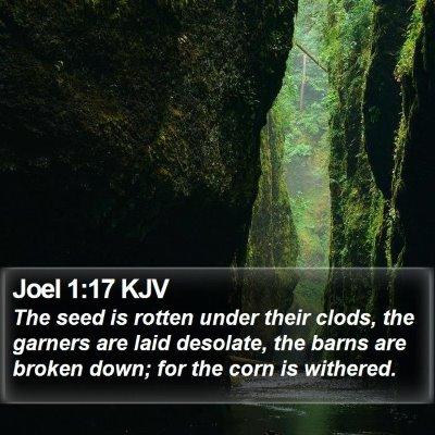 Joel 1:17 KJV Bible Verse Image