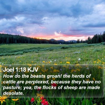 Joel 1:18 KJV Bible Verse Image