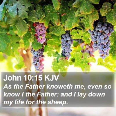 John 10:15 KJV Bible Verse Image