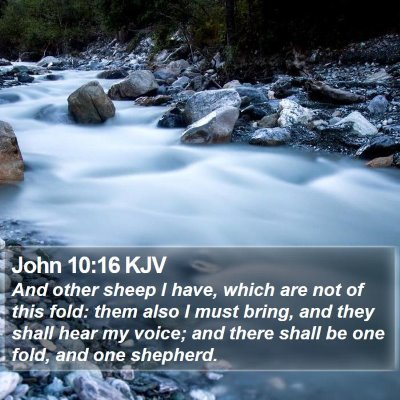 John 10:16 KJV Bible Verse Image
