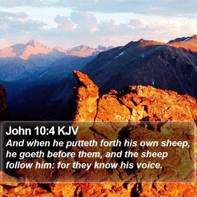 John 10:4 KJV Bible Verse Image