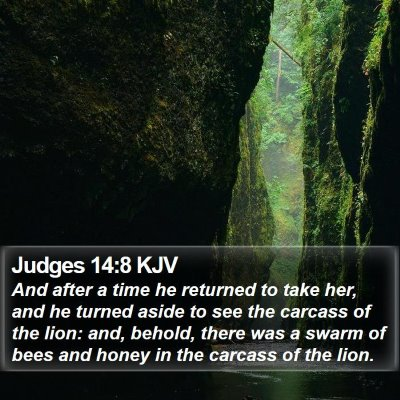 Judges 14:8 KJV Bible Verse Image