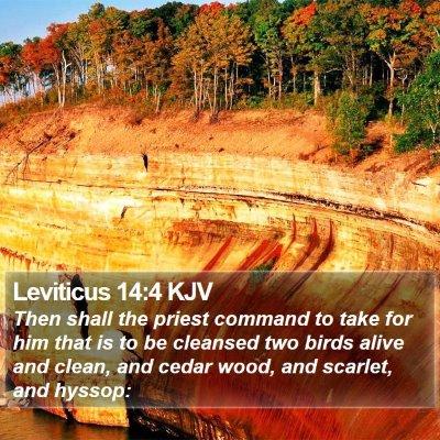 Leviticus 14:4 KJV Bible Verse Image