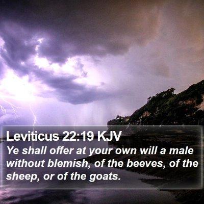 Leviticus 22:19 KJV Bible Verse Image