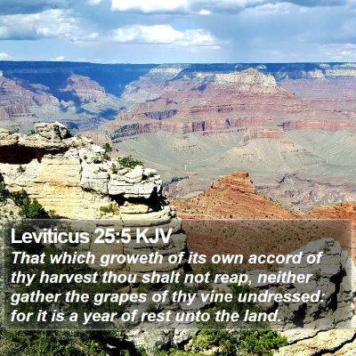 Leviticus 25:5 KJV Bible Verse Image