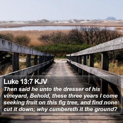 Luke 13:7 KJV Bible Verse Image