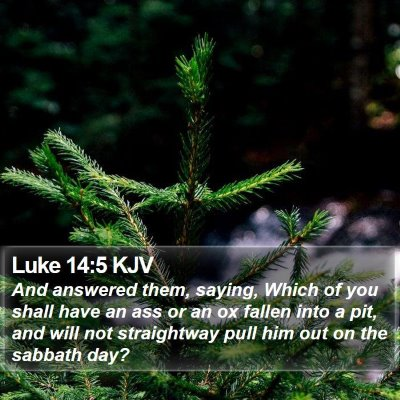 Luke 14:5 KJV Bible Verse Image