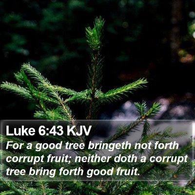 Luke 6:43 KJV Bible Verse Image