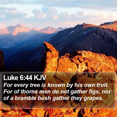 Luke 6:44 KJV Bible Verse Image