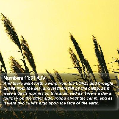 Numbers 11:31 KJV Bible Verse Image