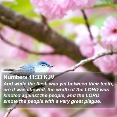 Numbers 11:33 KJV Bible Verse Image