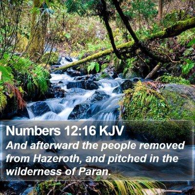 Numbers 12:16 KJV Bible Verse Image