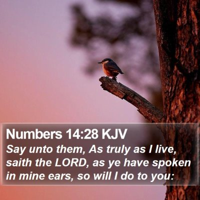 Numbers 14:28 KJV Bible Verse Image