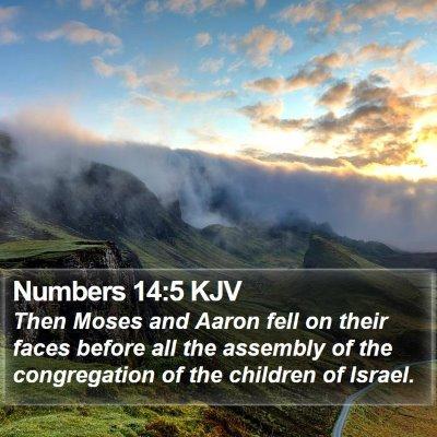 Numbers 14:5 KJV Bible Verse Image