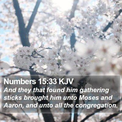 Numbers 15:33 KJV Bible Verse Image